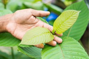 5 Impressive Benefits Of Kratom